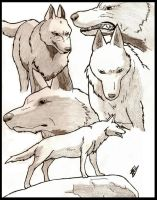 Last Sons of the Wolf Clan by dollrandir