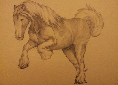 Clydesdale Sketch by Demite