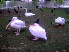 Birds, they really look awesome. by ASFmaggot