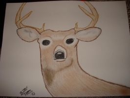 Whitetail deer by MakingMyMark