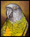 Detail Kimmi by Heliocyan