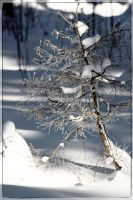 Winter tree by lumiere81