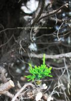green by iso-50