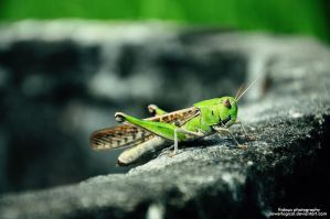 Grasshopper by powerlogical