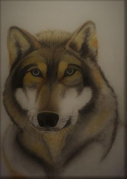 Wolf in Tinted Charcoal by Jills-Designs