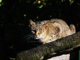 Cat on the roof :D by 75ronin