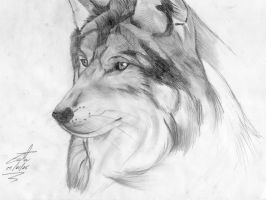 Wolf by Costa85