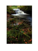 Clare Glens by PicTd