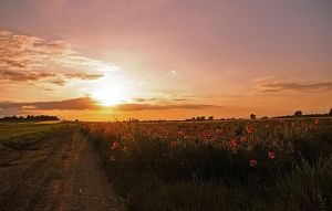 The full meadow of poppies by grindz0ne