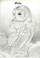 Beautiful Owl by xcxNinuixcx