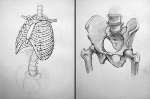 Anatomy studies by insidegt