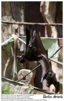 Fruit Bat by Della-Stock