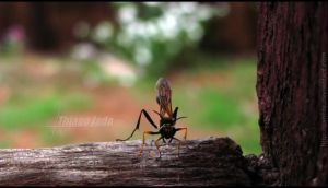Wasp by TJShots