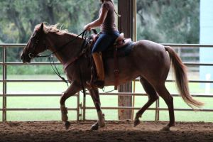 Working Light Breed Stock 4 by OceanLore