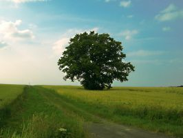 Lonely Tree 2 by Sed-rah-Stock