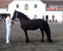 Frieasian horse show I. by Ennete