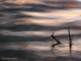 Waves and stalks... by boreasz