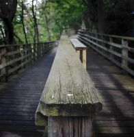 Lake Forest wooden beach path by FrenchieSmalls