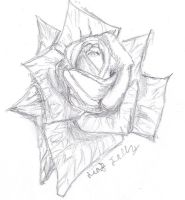 Rose Drawing by Leafjelly