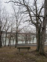 Trees and Lake 4 by r-a-i-n-y