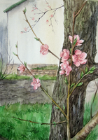 Flowering peaches by pranDIV