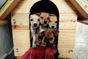 Puppies by Annabel158