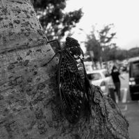 Cicada by Waterdroplet-s