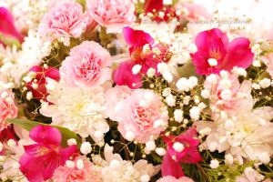 Pink Carnation Bouquet by Hitomii
