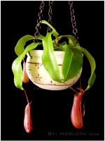 Nepenthes by morloz