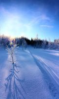 ski trail in the woods by KariLiimatainen