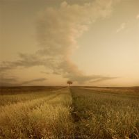 Golden silence by Alshain4