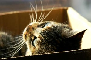 Frits in her box in the sun by Thomas-Mifune