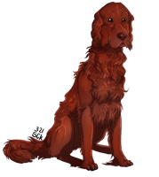 . Irish Setter dog . by ShadowCatsKey