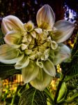 Evening flower by harydas