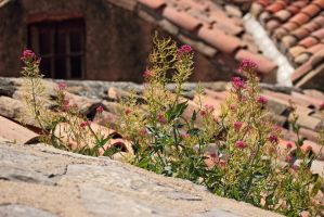 Flowery Roof by panna-cotta