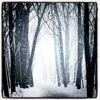 ~ White Forest ~ by AngelSaphireBlue