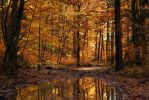 beechen forest V by Wilithin