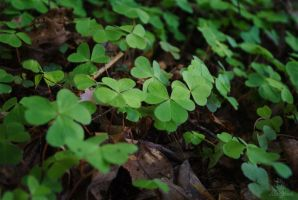 more clover by Shearkin