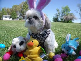 I AM Easter Gizmo by Moonstone27