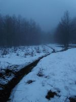 Forest, Snow and Fog by bob60t