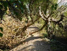 The blocked path by Kayleigh-Kaz