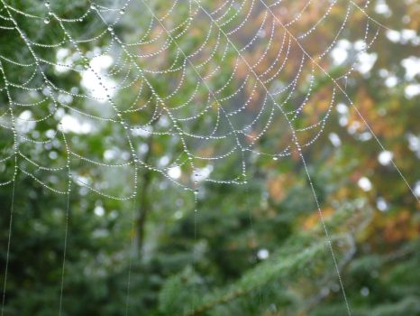 Dew Covered by MystiqueDeep