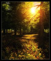 Follow the Sun by 00AngelicDevil00