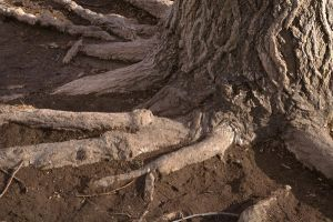 Muddy Tree Base by Stock-Photoz