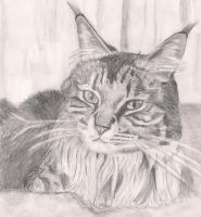 Fudge the Cat by charigr