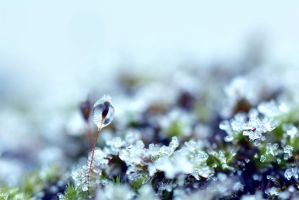 Dewdrops in winter wonderland by Fridelisan