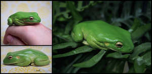 :.Sleepy tree frog.: by XPantherArtX
