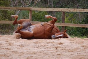 TB rolling legs up tummy showi by Chunga-Stock