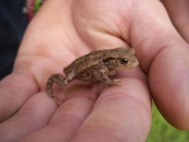 Baby Toad by Kaikoura