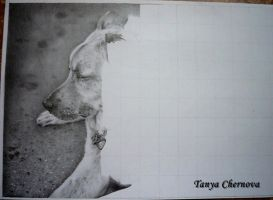 The dog, process by yatanya